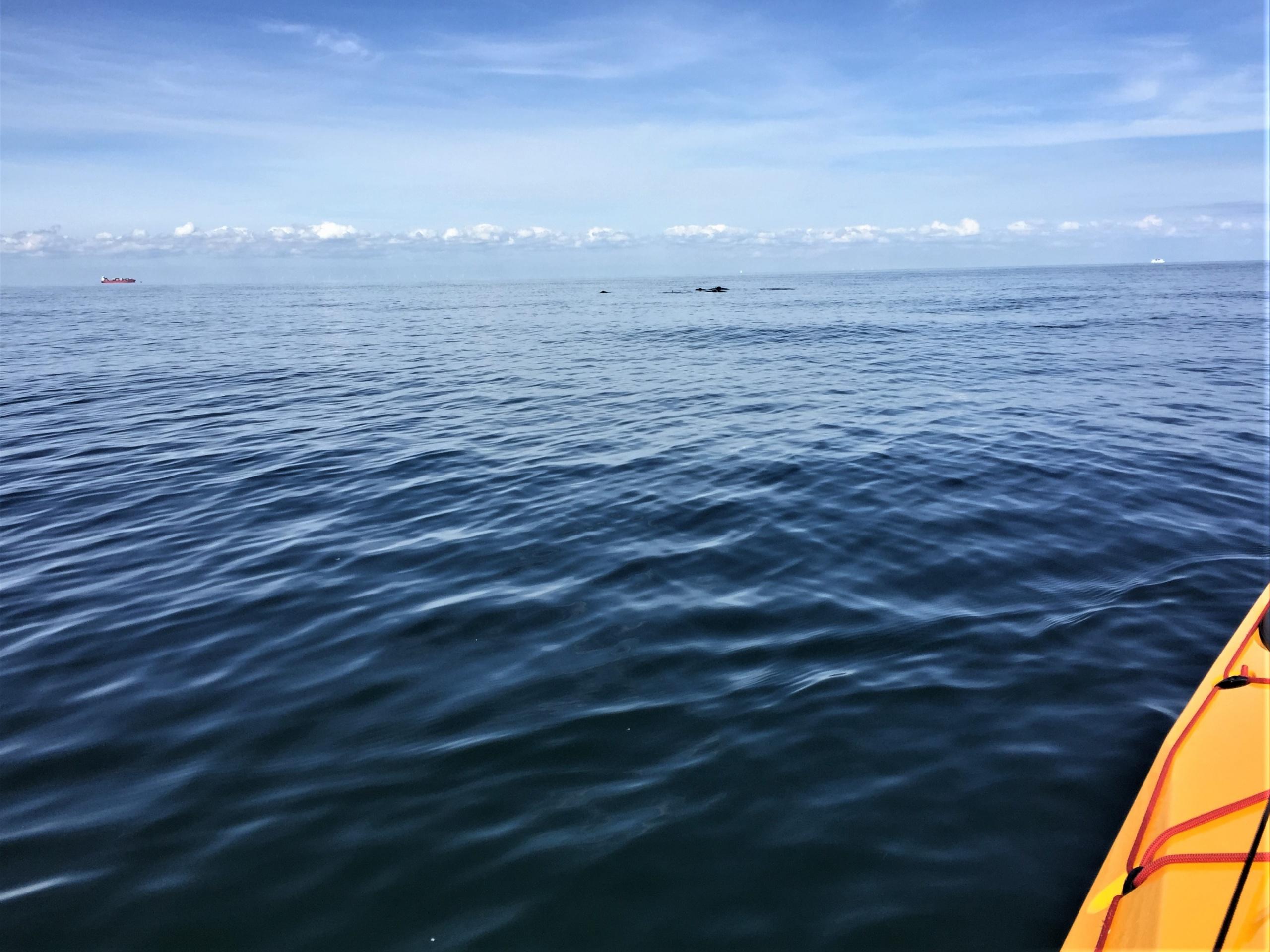 Schweinswale voraus